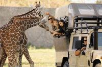 Liberia to Africa Mia Zoo