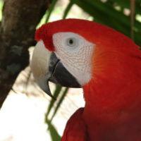 Animals in Tamarindo Costa Rica